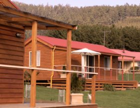 Maydena Country Cabins Accommodation  Alpaca Stud - Accommodation Whitsundays