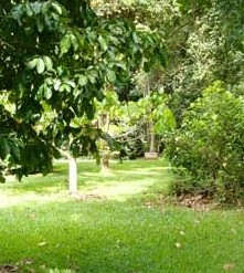Kingfisher Park Birdwatchers Lodge - Accommodation Whitsundays