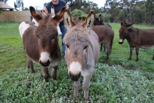 Donkey Tales Farm Cottages - Accommodation Whitsundays