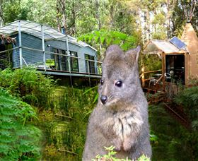 Huon Bush Retreats - Accommodation Whitsundays