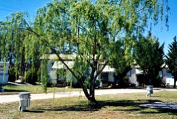 Blue Topaz Caravan Park  Camping Ground - Accommodation Whitsundays