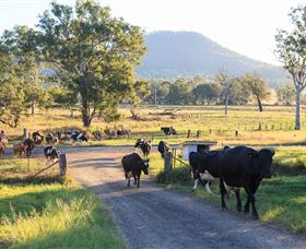 Tommerups Dairy Farmstay - Accommodation Whitsundays