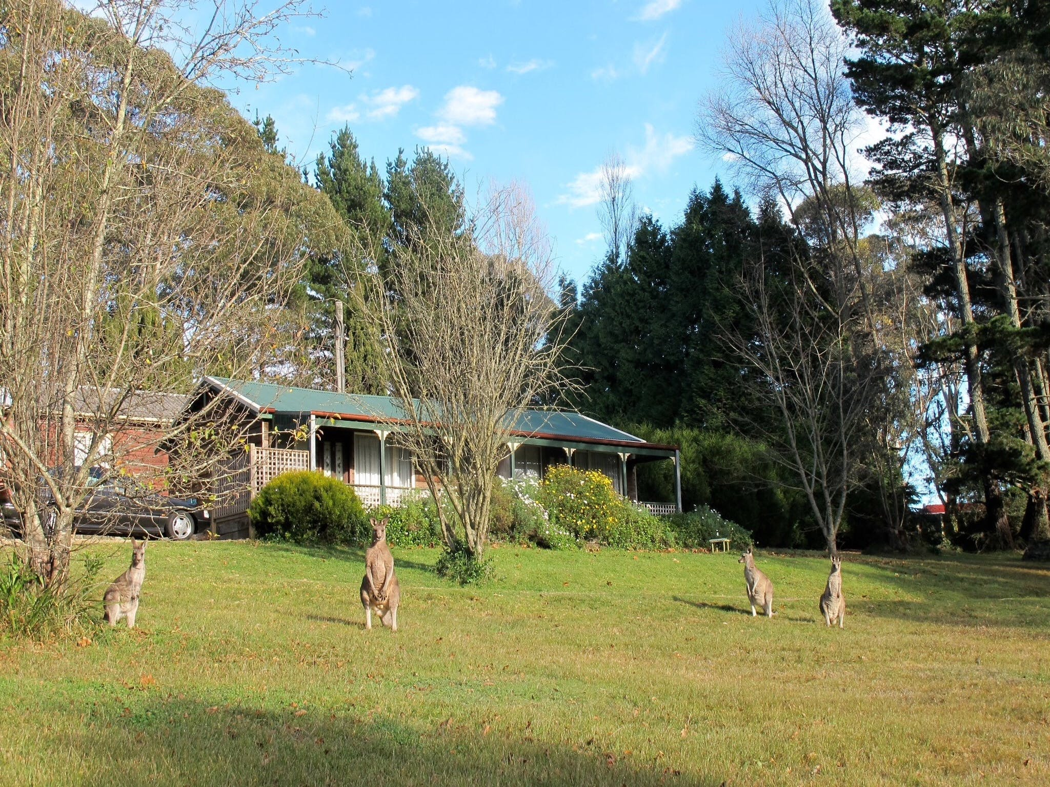 Cedar Lodge Cabins - Accommodation Whitsundays