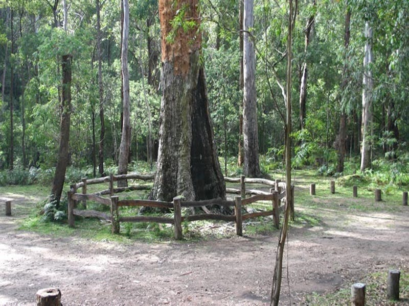 Six Mile Creek campground - Accommodation Whitsundays