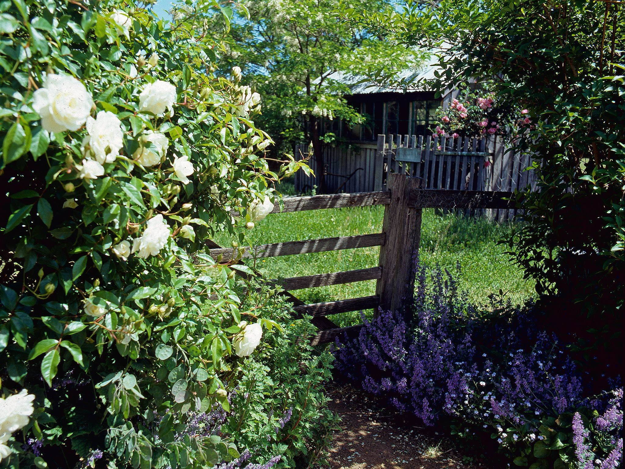 Hamilton's Cottage Collection and Country Gardens - Edwards - Accommodation Whitsundays