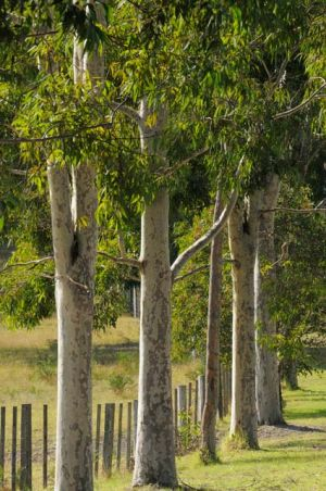 Stringybark Cottages - Accommodation Whitsundays