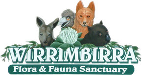 Wirrimbirra Sanctuary - Accommodation Whitsundays