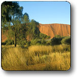 Uluru - Kata Tjuta National Park - Accommodation Whitsundays