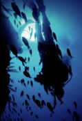 Scuba World - Accommodation Whitsundays