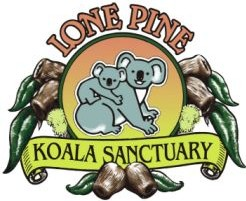 Lone Pine Koala Sanctuary - Accommodation Whitsundays