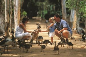 Billabong Sanctuary - Accommodation Whitsundays