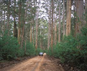 Boranup Drive - Accommodation Whitsundays