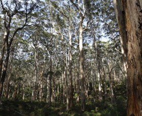 Boranup Karri Forest - Accommodation Whitsundays