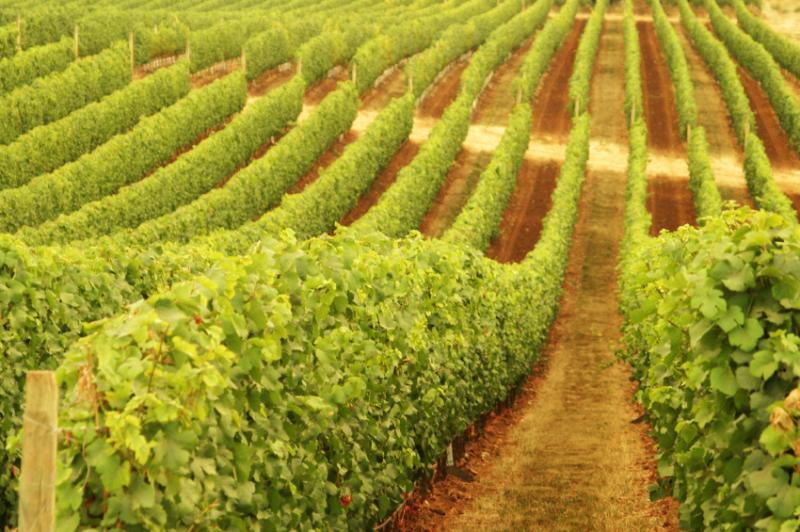 Xanadu Wines - Accommodation Whitsundays