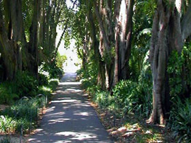 Adelaide Botanic Garden - Accommodation Whitsundays