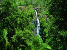 Kondalilla National Park - Accommodation Whitsundays