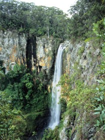 Gondwana Rainforests of Australia - Accommodation Whitsundays