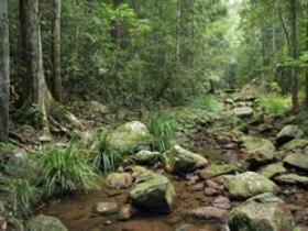 Amamoor State Forest - Accommodation Whitsundays
