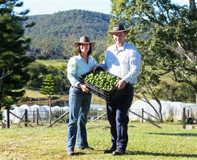 Hinterland Feijoas - Accommodation Whitsundays