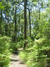 Mapleton Falls National Park - Accommodation Whitsundays