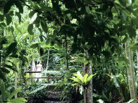 Flecker Botanic Gardens - Accommodation Whitsundays