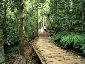 Lake Barrine Circuit Track Crater Lakes National Park - Accommodation Whitsundays