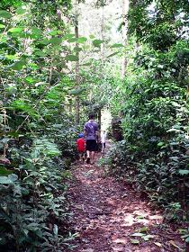 Malanda Falls Rainforest Walk Malanda Falls Conservation Park - Accommodation Whitsundays