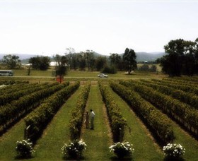 Rochford Wines - Accommodation Whitsundays