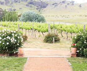 Brindabella Hills Winery - Accommodation Whitsundays