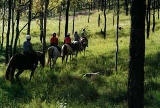 Hunter Valley Horse Riding and Adventures - Accommodation Whitsundays