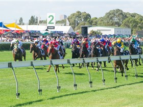 Morphettville Racecourse - Accommodation Whitsundays