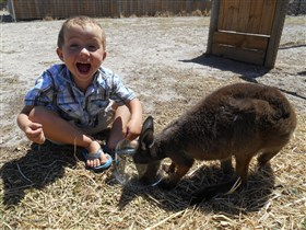 Animal Farm Goolwa - Accommodation Whitsundays