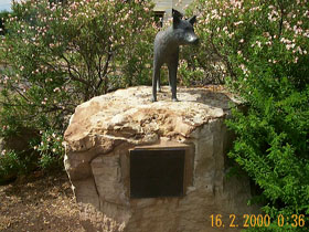 Dingo Statue - Accommodation Whitsundays