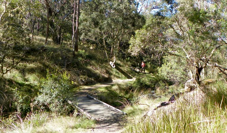 Wollomombi walking track - Accommodation Whitsundays
