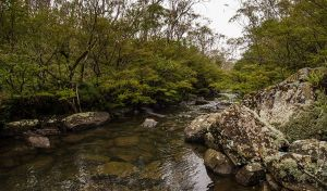 River walking track - Accommodation Whitsundays