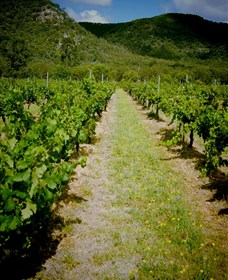 Gartelmann Wines - Accommodation Whitsundays