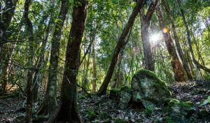 Copeland Tops State Conservation Area - Accommodation Whitsundays