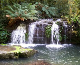Barrington Tops National Park Walks - Accommodation Whitsundays