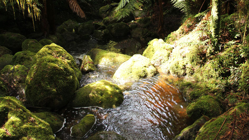 South East Forests National Park - Accommodation Whitsundays
