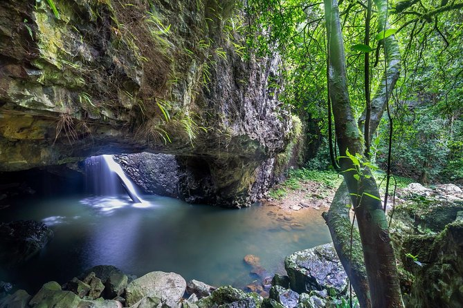 Springbrook and Tamborine Rainforest Tour Including Natural Bridge and Glow Worm Cave - Accommodation Whitsundays