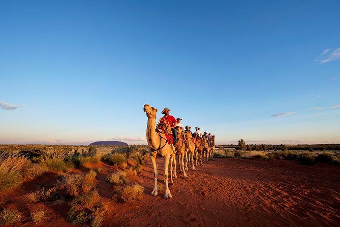 Uluru Camel Express Sunrise or Sunset Tours - Accommodation Whitsundays