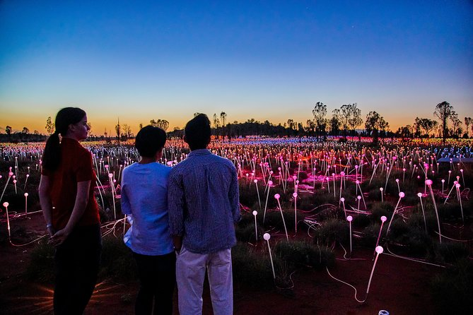 Uluru Field of Light Sunrise Tour - Accommodation Whitsundays