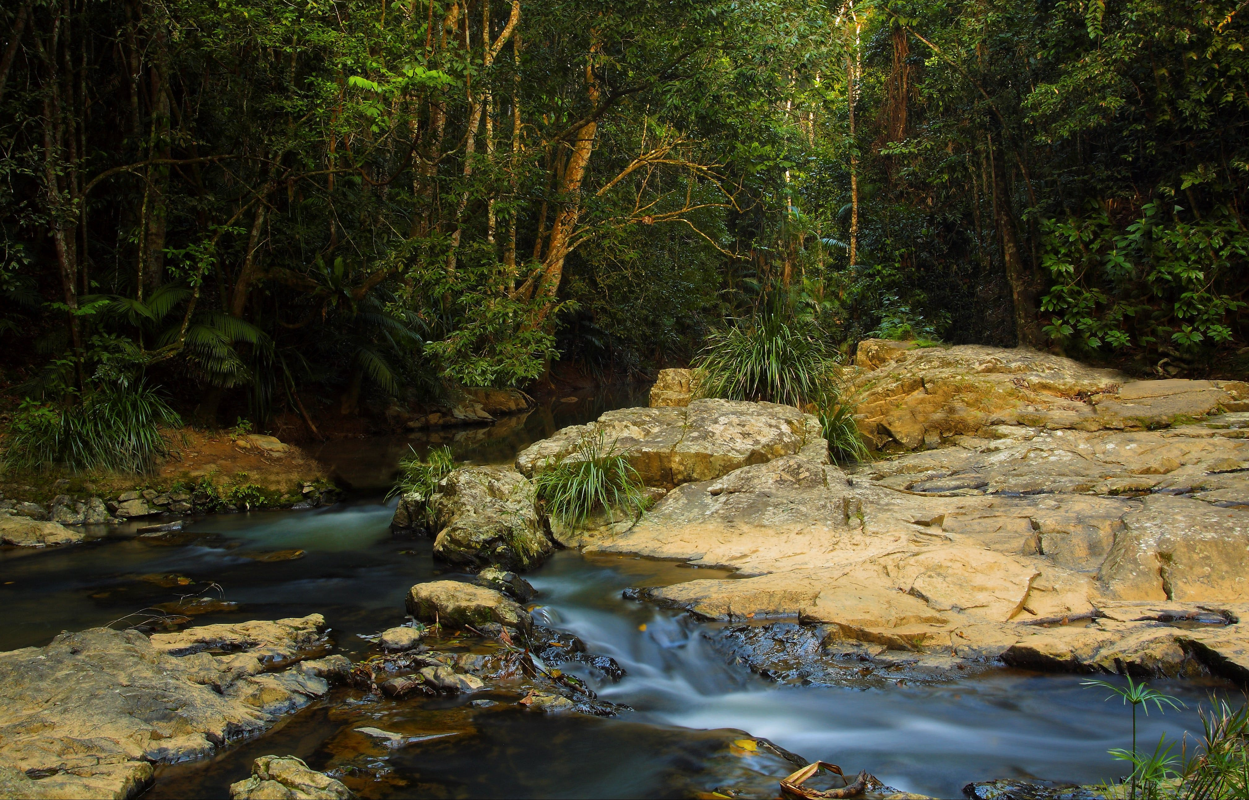 Jumrum Creek Walk Jumrum Creek Conservation Park - Accommodation Whitsundays