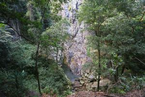 Kondalilla Falls Circuit Kondalilla National Park - Accommodation Whitsundays