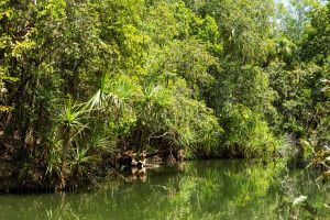 Berry Springs Nature Park - Accommodation Whitsundays