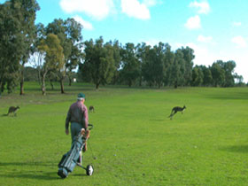Coffin Bay Golf Club - Accommodation Whitsundays