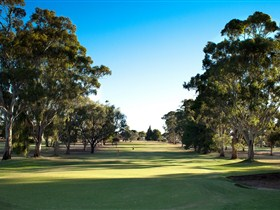 Loxton Golf Club - Accommodation Whitsundays