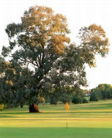Cowra Golf Club - Accommodation Whitsundays