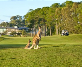 Sanctuary Cove Golf and Country Club - Accommodation Whitsundays