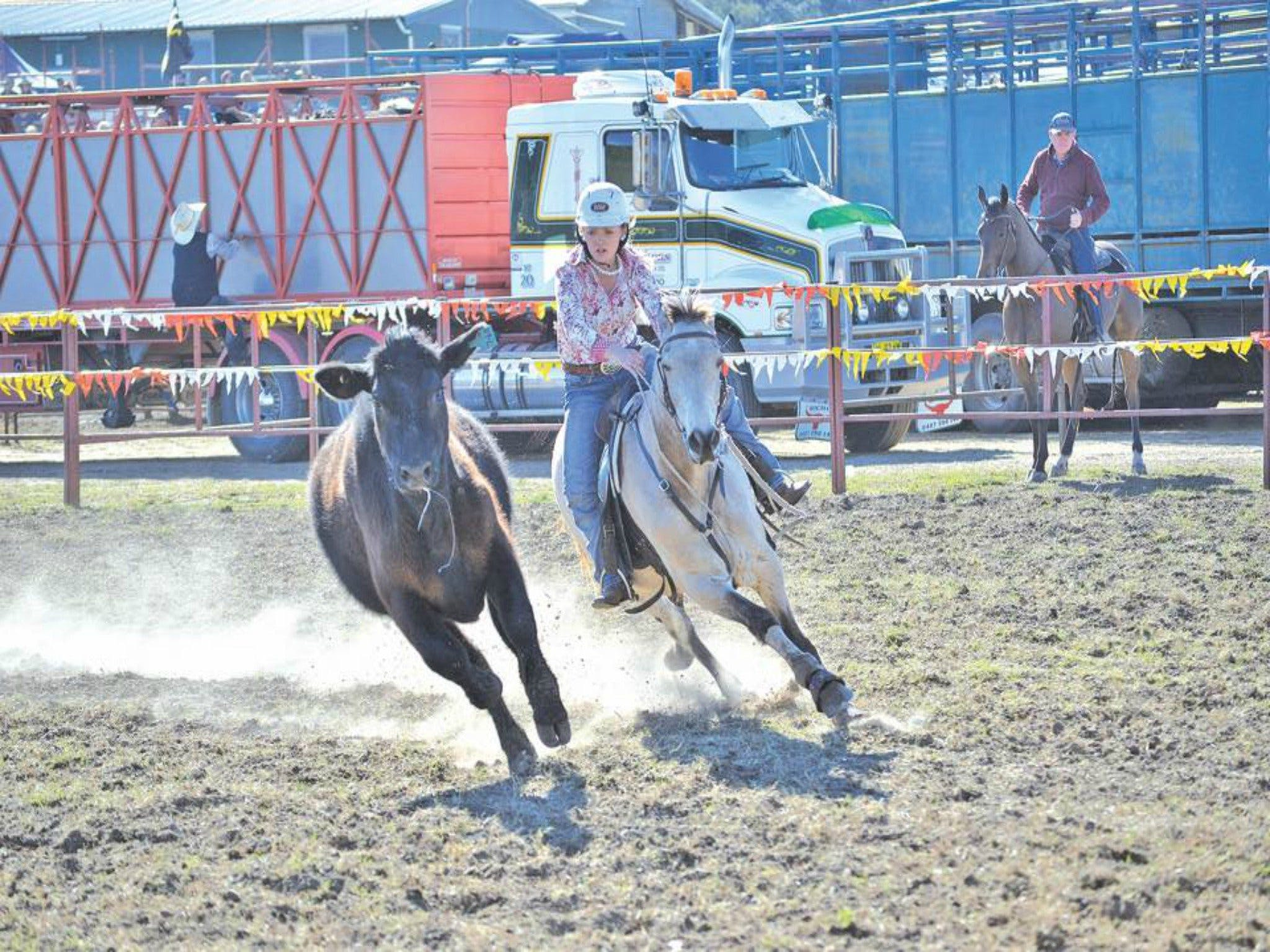 Gresford  Campdraft and Rodeo - Accommodation Whitsundays